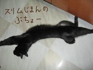 スリムな猫ノア