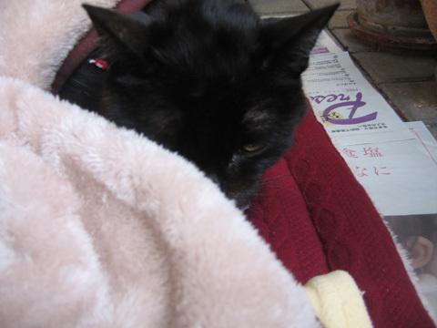 猫ノアのベランダピクニック