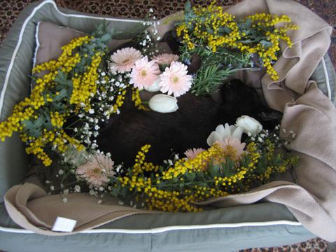 猫ノアの葬儀