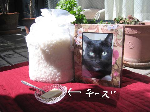 猫ノア一周忌