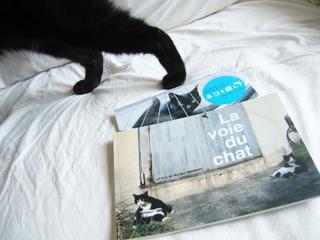 ネコを探してと猫ノア2