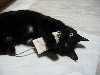 キャットニップおもちゃと猫ノア