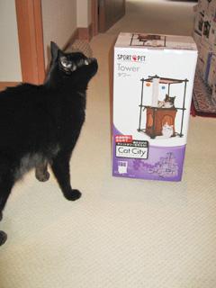 猫ノアとCatCityキャットタワー