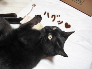 猫ノアぶちょー11歳