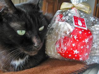 猫ノアとおもちゃギフトパッケージ