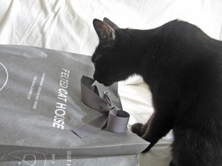 猫ノア、プレゼントを受け取る