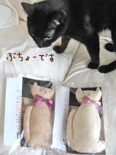 猫ノアとオーガニックキッカー