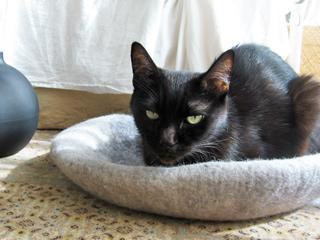 猫ノアとあったかベッド