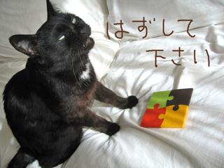 猫ノアとフェルトおもちゃ