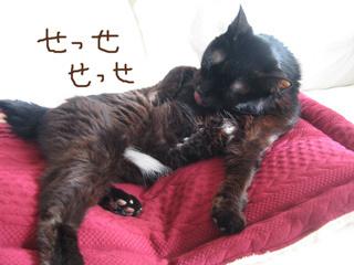 猫ノアとホットマット
