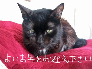 猫ノア年末のご挨拶