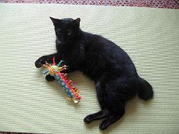 シッポの短い黒猫