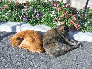 猫町谷中のネコさん