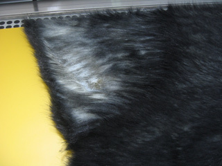 クロネコヤマトの黒猫さん