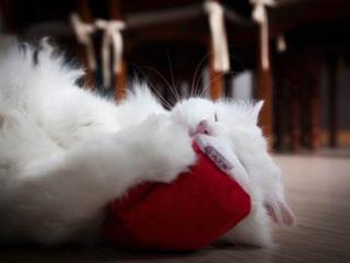 ドイツの猫おもちゃ