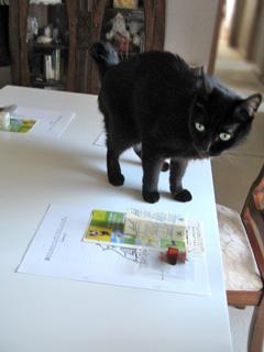 猫のためのフラワーレメディ教室