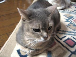 亡き猫てっちゃん