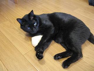 黒猫ぴゅうちゃん