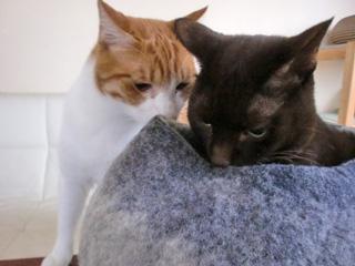 あったかキャットベッドと猫さんズ