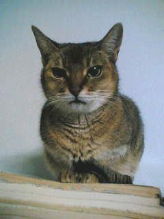 亡き猫チビラ