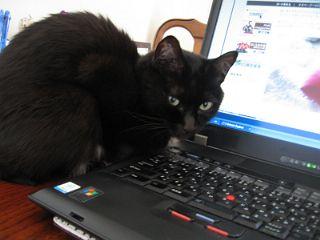 黒猫とPC