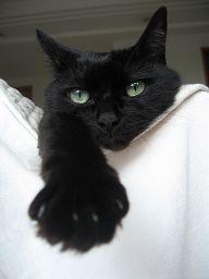 nekomono看板猫