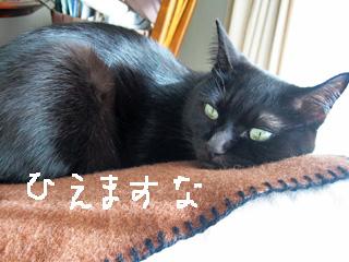 ひえひえ猫ノア