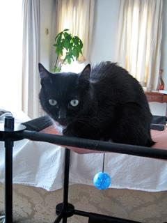 猫ノアのぶちょー席