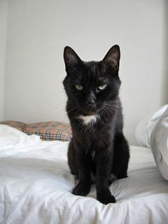 ゴールデンウィークの猫ノア