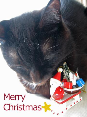 猫ノアからメリークリスマス!