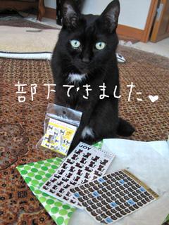 猫ノア12歳