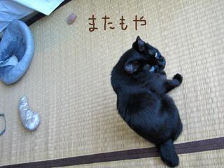猫ノアと沖縄ビーグ敷き