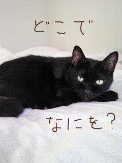 あやしむ猫ノア