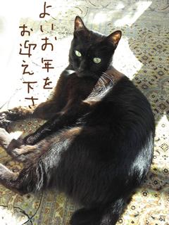 猫ノア部長2013年末のご挨拶