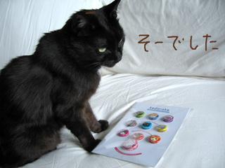 猫ノアとネコバッジ