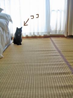 猫ノアと沖縄ビーグ