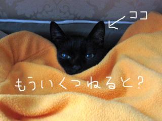 猫ノア、ねむねむ