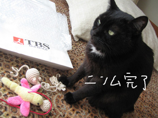猫ノア部長とラジオ