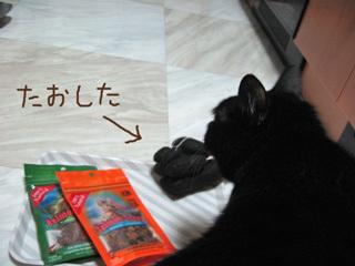 猫ノアのハロウィン