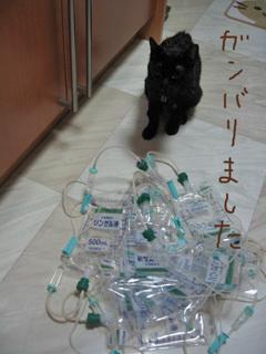 猫ノア、闘病