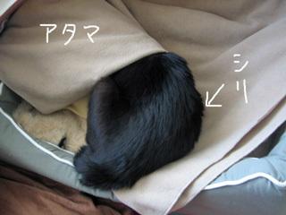 猫ノアことわざ体現