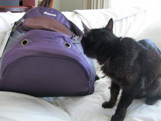 猫ノア、15歳