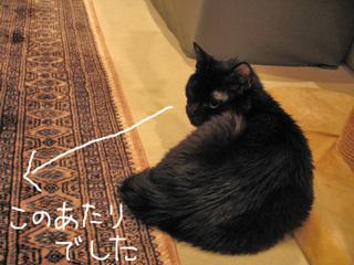 待つ猫ノア