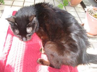 猫ノア、日向ぼっこ