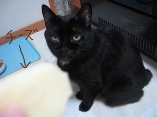 猫ノアとチーズ