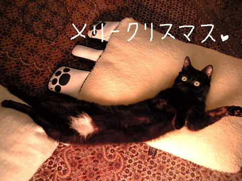 猫ノア4歳のクリスマス