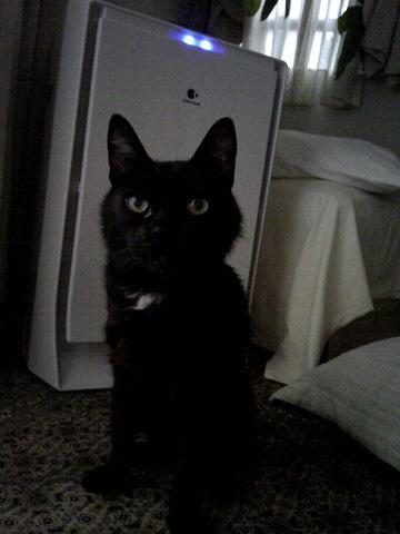 猫ノアと空気清浄機