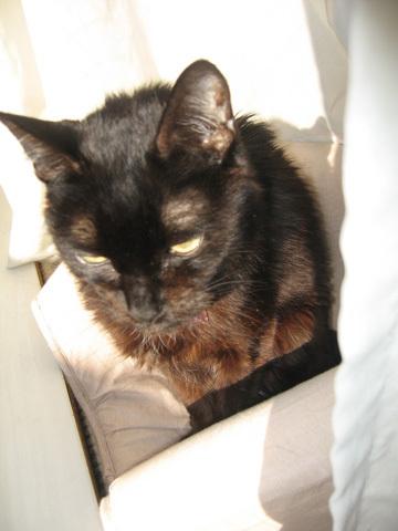 猫ノアと朝の光