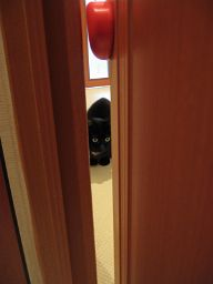 黒猫ノアとドアクッション
