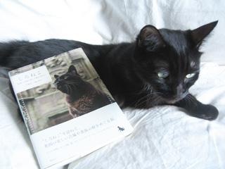 黒猫としろねこ